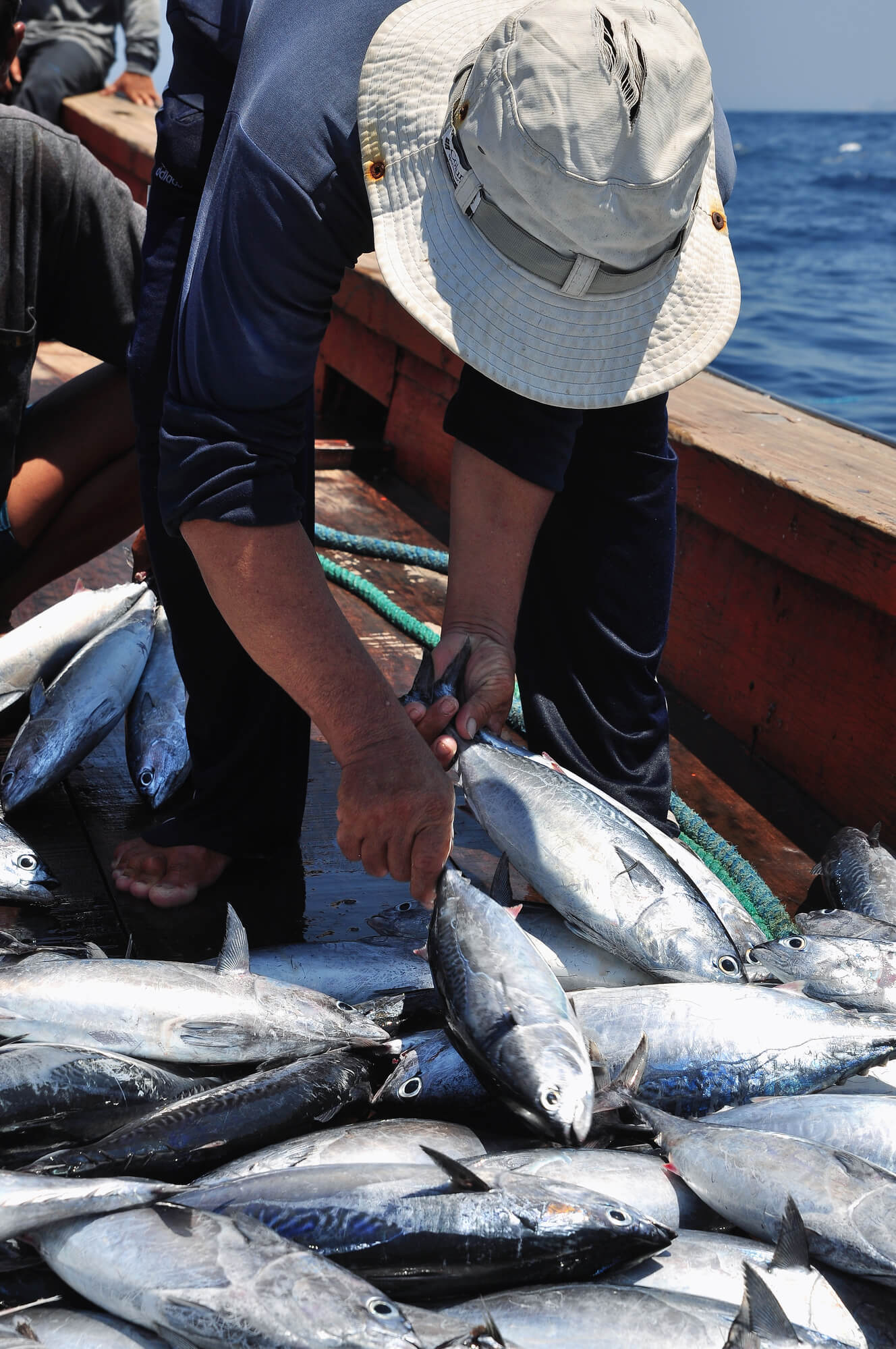 Bumper catch of tuna fish - commercial fishing