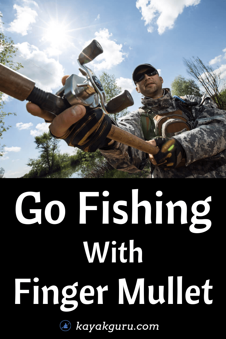 Go Fishing With Finger Mullet - Pinterest Image
