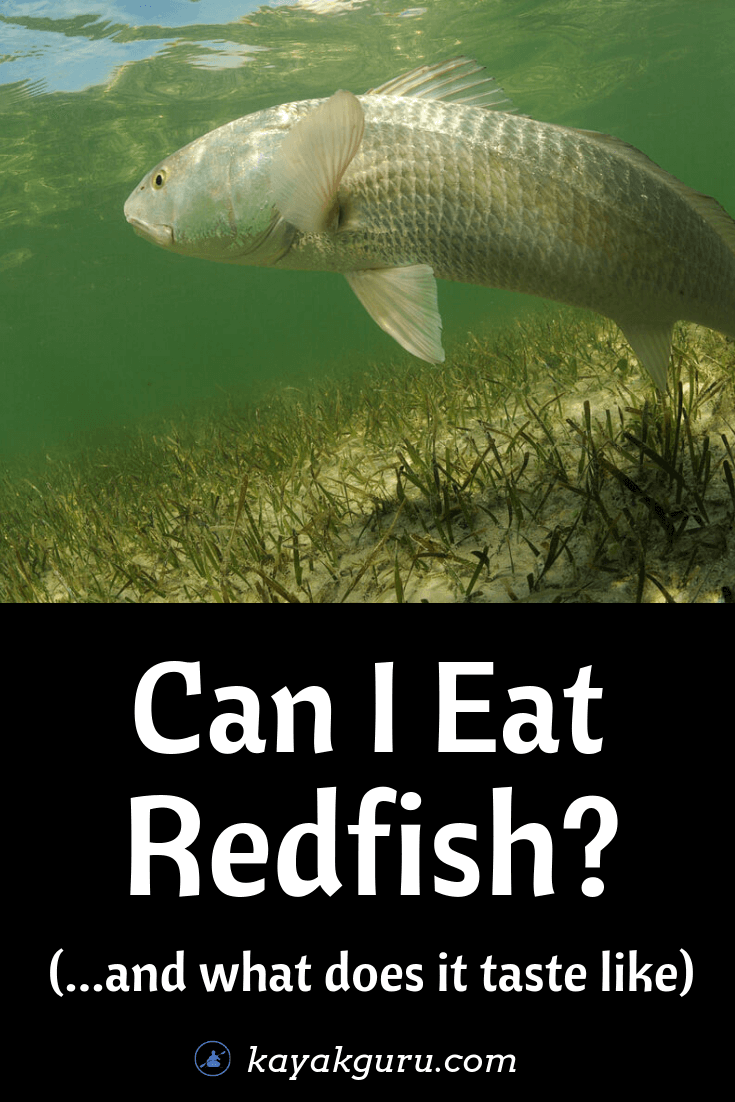 Can I Eat Redfish And What Does It Taste Like (Recipes