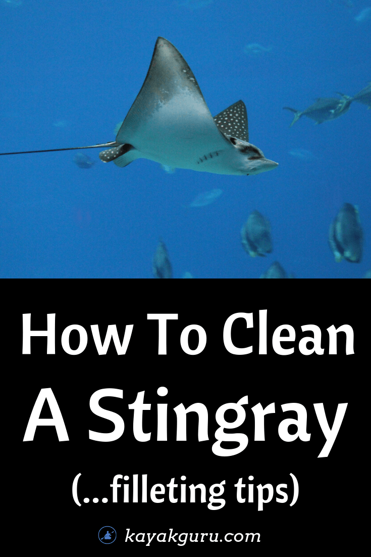 How To Clean A Stingray (Filleting Tips) - Pinterest Image