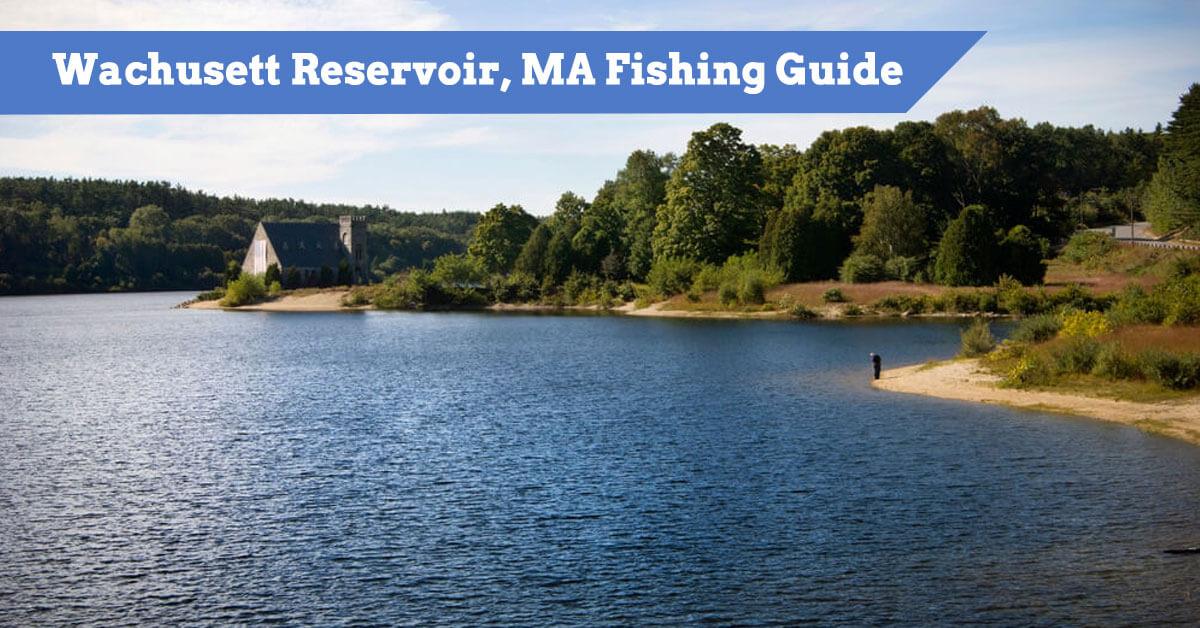 Wachusett Reservoir, Massachusetts Fishing Guide