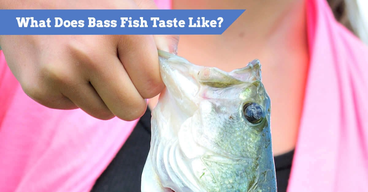 What Does Bass Taste Like? Preparing And Cooking Bass (plus