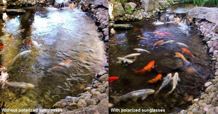 Polarized vs Non-Polarized Singlasses for Fishing or Kayaking