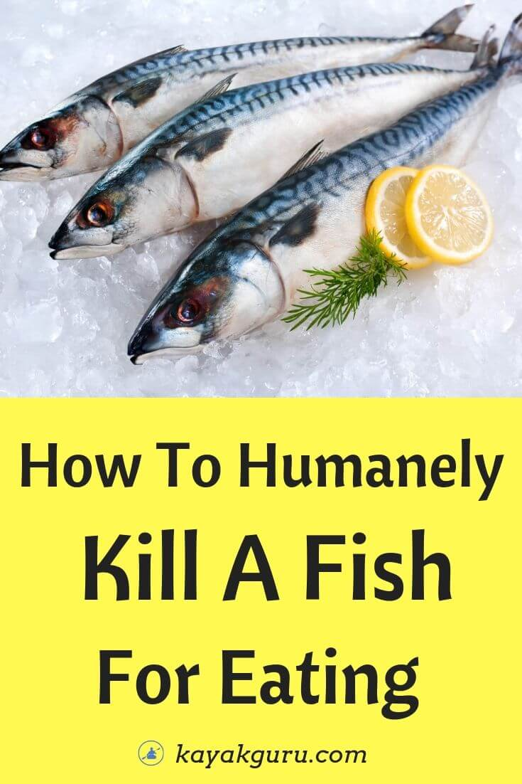 How To Humanely Kill A Fish For Eating - Pinterest
