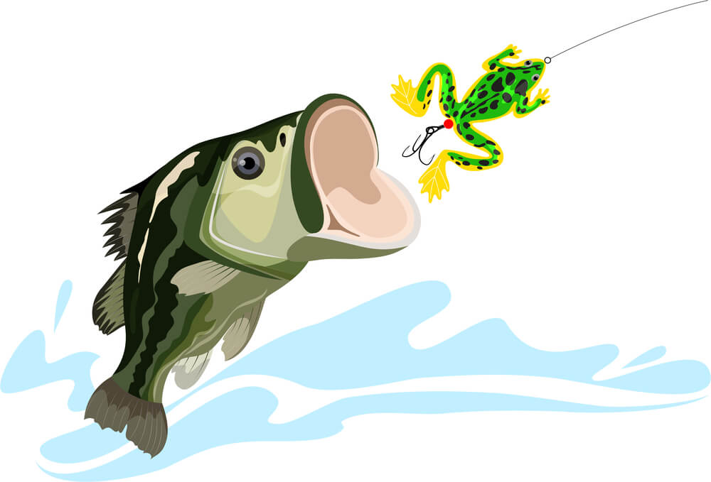 Bass Fish catching Frog lure and bait
