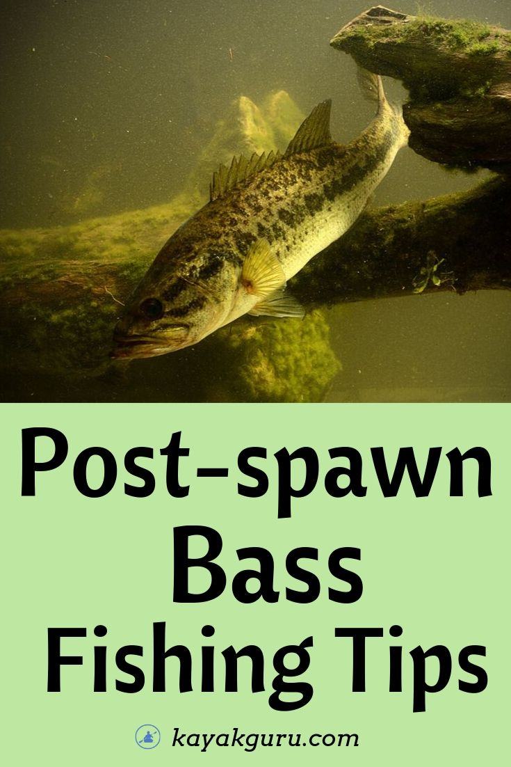 Post Spawn Bass Fishing Tips - Pinterest Image