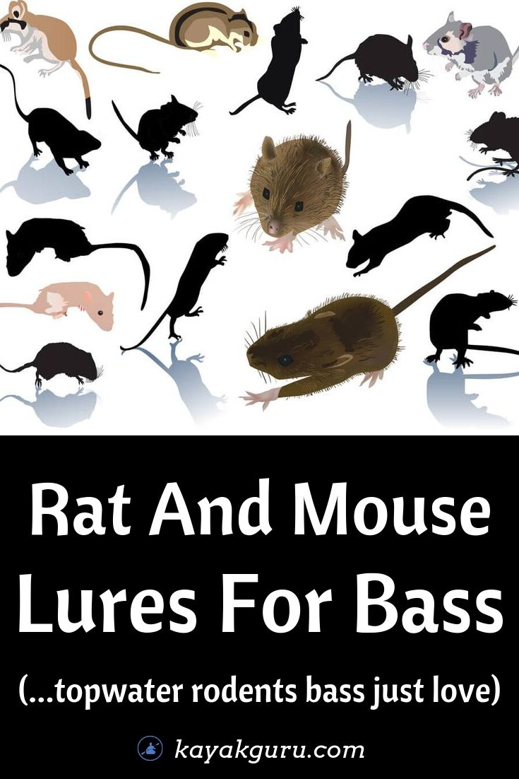 Using Rat And Mouse Lures For Bass - Pinterest Image