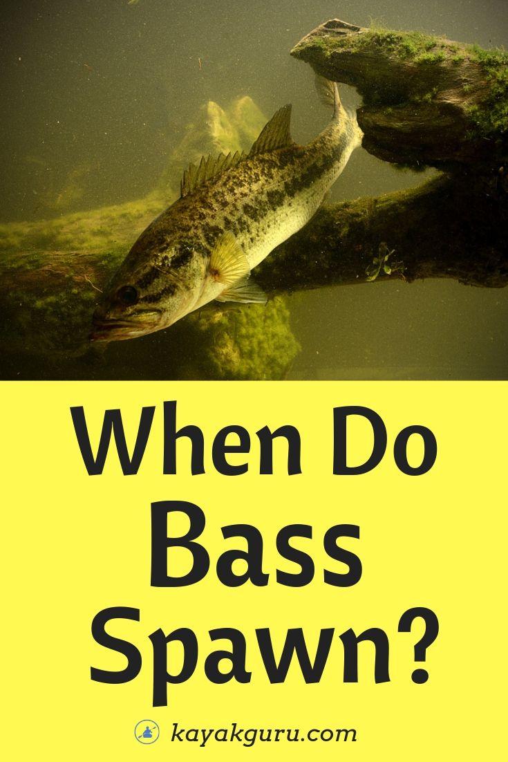 When Do Bass Spawn - Pinterest