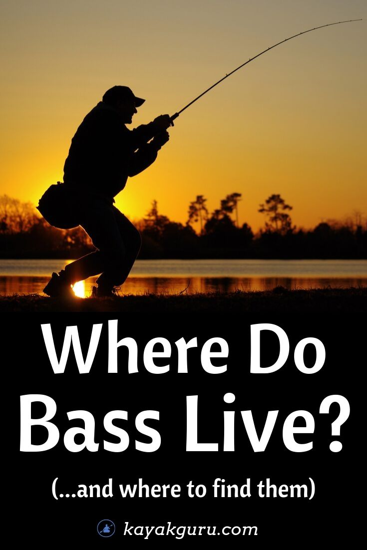 Where Do Bass Live And Where To Find Them - Pinterest Image